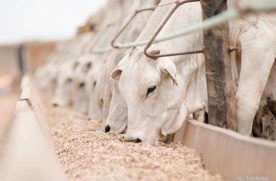 Resultado de imagem para suplementação de bovinos